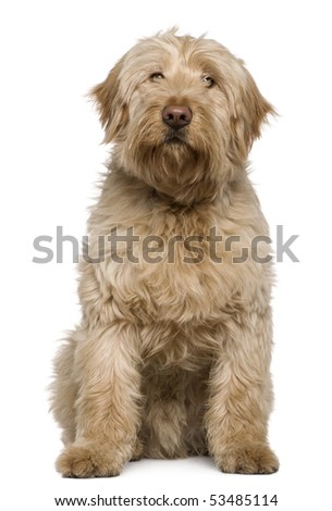 Mixed-breed dog, 8 months old, sitting in front of white background - stock photo