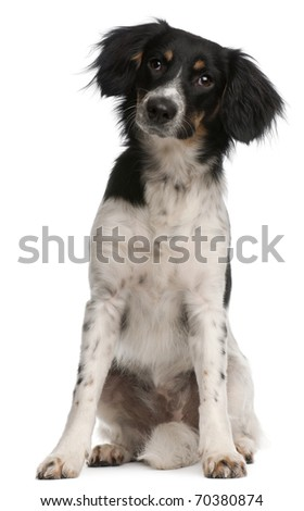 Mixed-breed dog, 9 months old, sitting in front of white background - stock photo