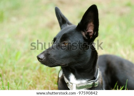 mixed breed dog on a meadow