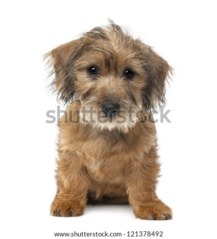 Mixed-breed dog puppy, 3 months old, sitting and looking at camera against white background - stock photo