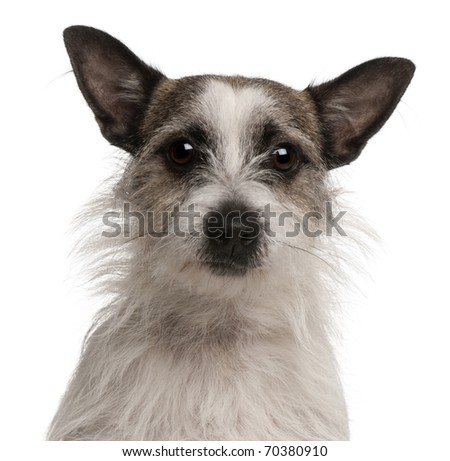 Mixed-breed dog, 2 years old, in front of white background - stock photo