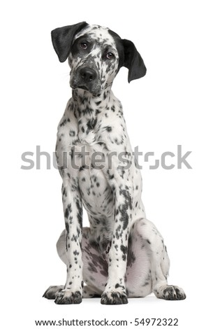 Mixed-breed puppy, 6 months old, sitting in front of white background - stock photo