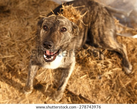 Mixed Breed Smiling Dog Lies on Manger, Top View - stock photo