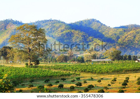 Mixed farm agriculture with coffee tree and grape fruit - stock photo