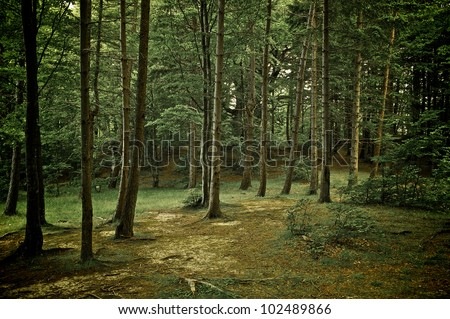 Mixed forest with walkway, green grass and trees (HDR) - stock photo