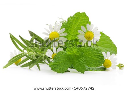 Mixed Herbs with mint, chamomile and rosemary,isolated on white background. - stock photo