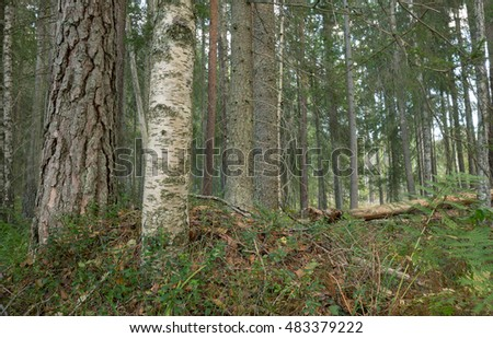 Mixed natural forest in sweden