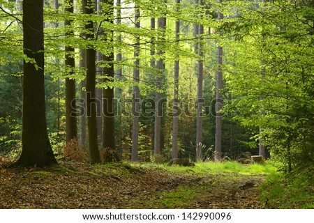 Mixed Tree Forest in Spring - stock photo