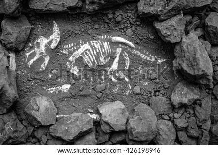 Model Dinosaur fossil - stock photo