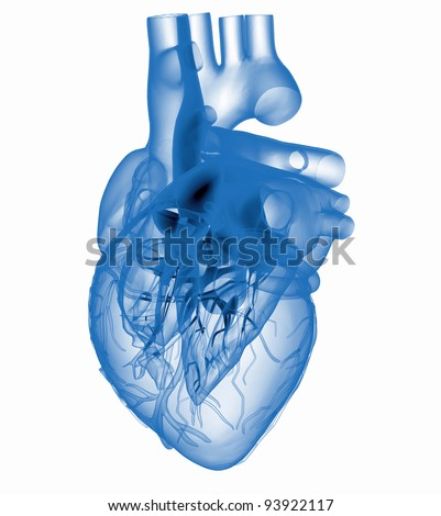 Model of artificial human heart - x-rayed - stock photo