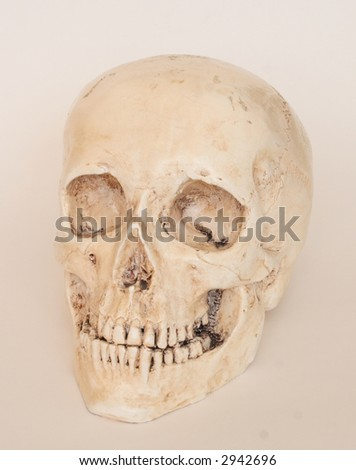 model of skull - stock photo