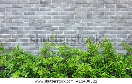 Modern Brick wall background with tree - stock photo