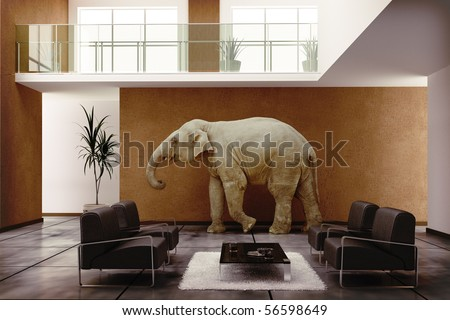 Elephant In The Room Stock Images, Royalty-Free Images & Vectors ...