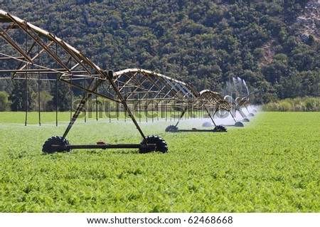 Modern irrigation system watering a carrot farm field - stock photo