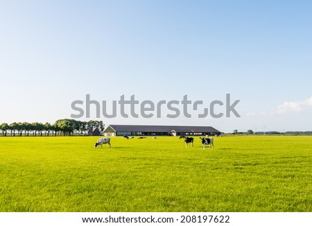 Modern stable with grazing cows in the meadow on a sunny day in the late spring season. - stock photo