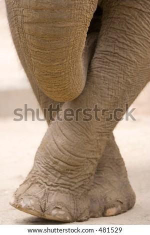 modest elephant - Denver Zoo - stock photo