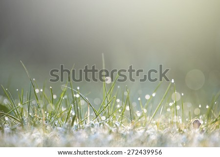 Moist grass in sunlight during early morning - stock photo