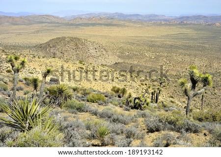 Mojave Desert Valley view - Joshua Tree National Park - stock photo