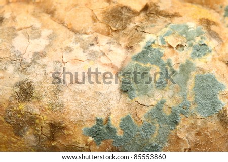 Mold growing old bread nobody texture background - stock photo