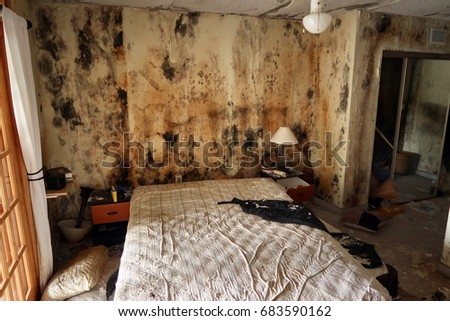 Mold in an abandoned, condemned apartment.