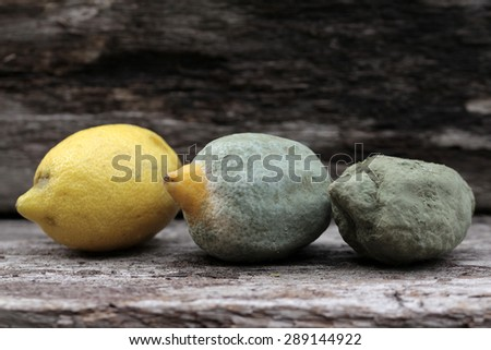 mold lemons - stock photo