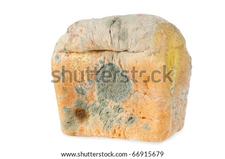 Moldy bread. Isolated on white.