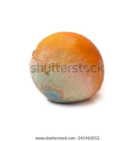 Moldy rotten orange fruit isolated on white - stock photo
