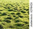 Molehill covered by a grass. - stock photo