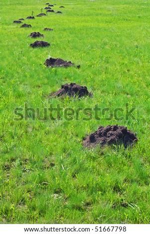 molehills in a line - stock photo