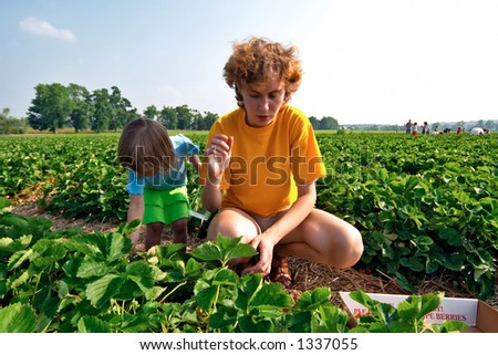 Mom and daughter gathering strawberry
