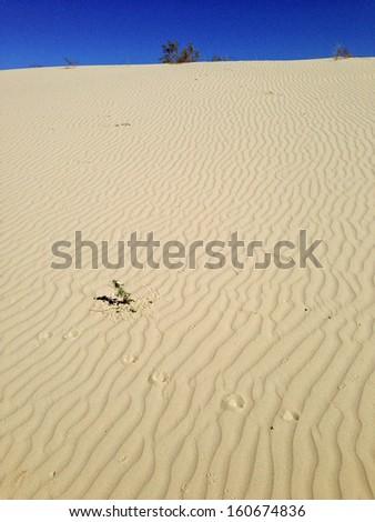 Monahans Sandhills State Park, Texas - stock photo