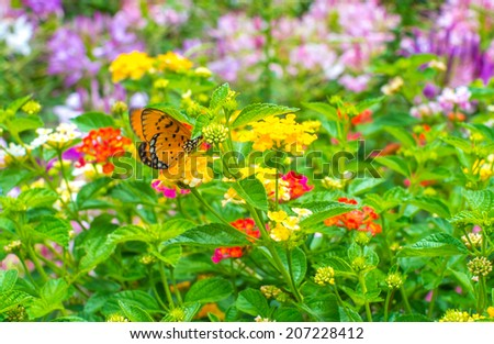 Etonnant Monarch Butterfly In Garden