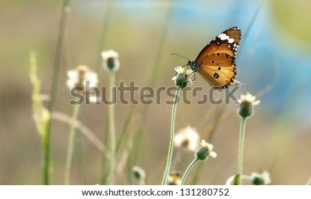 Monarch Butterfly on a flower - stock photo