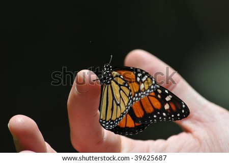 Monarch Butterfly on my finger