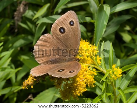 monarch butterfly on the flower - stock photo