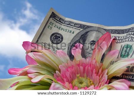 Money and daisy - stock photo