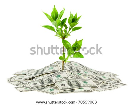 Money and plant isolated on white background - stock photo
