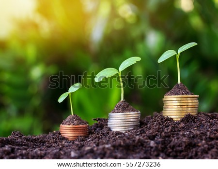 Money coin Steps.Business Finance and Money concept Hope of investor concept.tree growing on coin.Yellow tone with sun