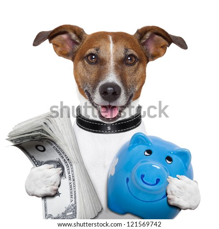 money dog holding a blue piggy bank - stock photo