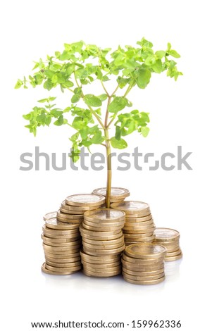 Money growing concept, isolated on white background - stock photo