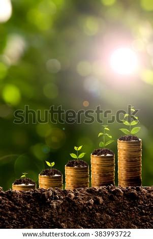 Money growing in soil - stock photo