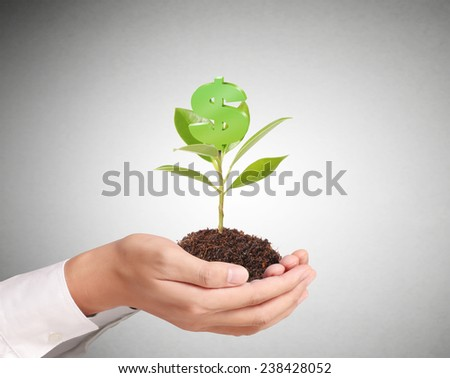 Money growing on tree, Dollar signs - stock photo