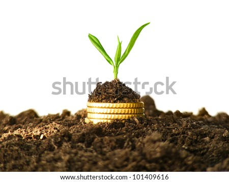 Money growth. Gold coins in soil with young plant. Financial metaphor. - stock photo