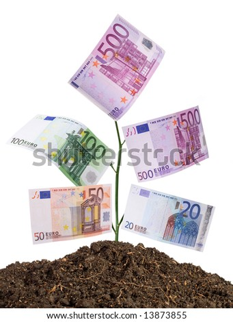 money plant isolated on white-clipping path