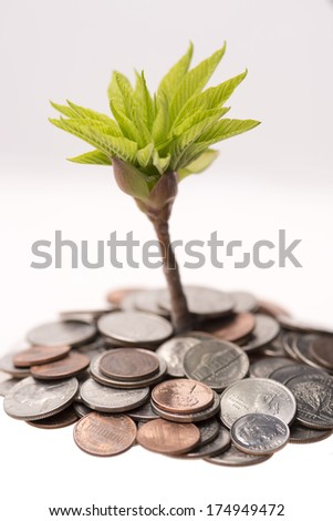 Money tree budding out of a mound of money