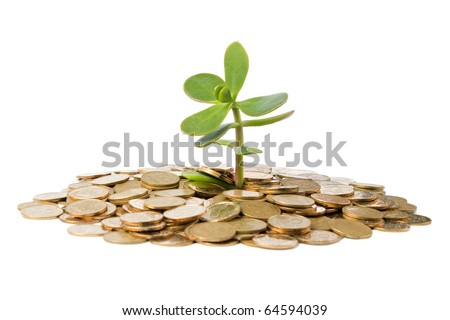 Money Tree (crassula) growing from a pile of coins. Isolated on white background. - stock photo