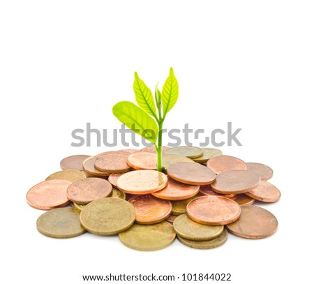 Money Tree growing from a pile of coins. Isolated on white background. - stock photo