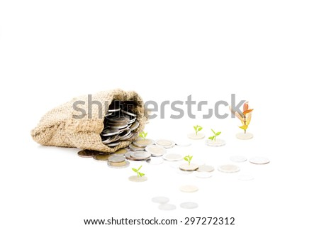 Money Tree growing out of a Money Bag with Dollar in isolated on white background