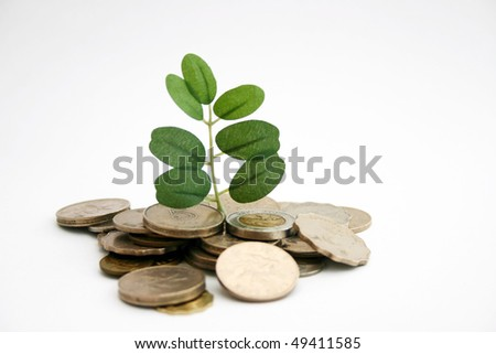 Money tree made by leaf and coin - stock photo