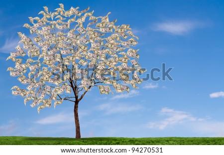 Money tree on blue sky, and grassy field - stock photo